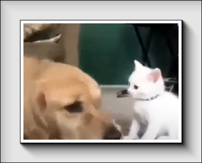 Youtube : Compilation, amusante, chiens, chats…