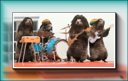 Youtube : Marmottes musiciennes…